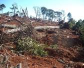 IAP aplica mais de R$ 120 mil em multas por desmatamento em São Mateus do Sul