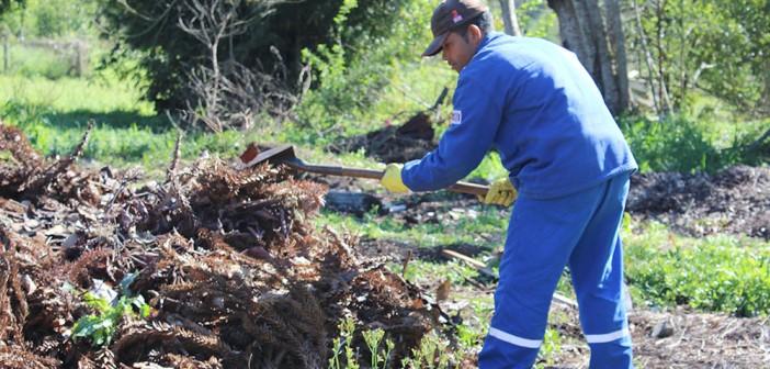 Restos de folhas dão vida às árvores e flores em São Mateus do Sul