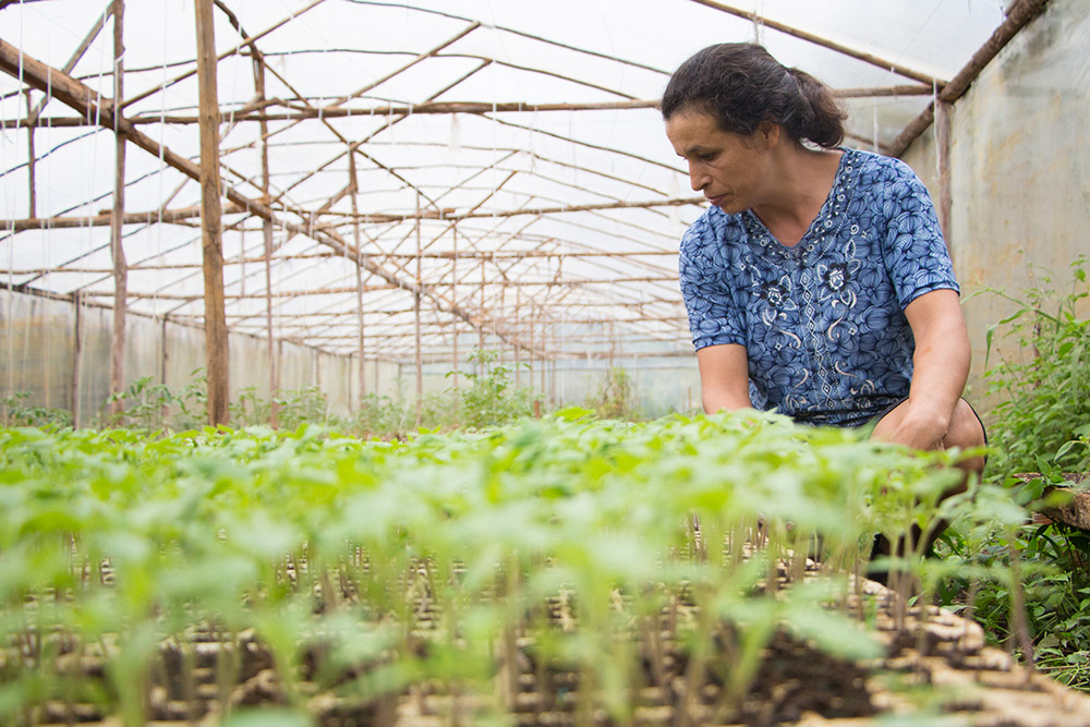 """""""Eu me sinto realizada"""", comenta Rosimara sobre seu trabalho na produção de verduras. (Fotos: Larissa Drabeski/Gazeta Informativa)"""